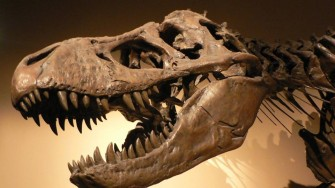 DINOSAUR'S ARE COMING TO DURBAN THIS NOVEMBER