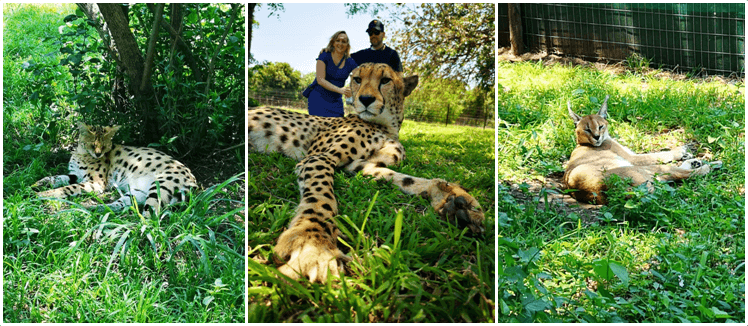 Zululand Cat Conservation Project